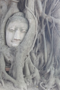 Buddha Kopf Ayutthaya